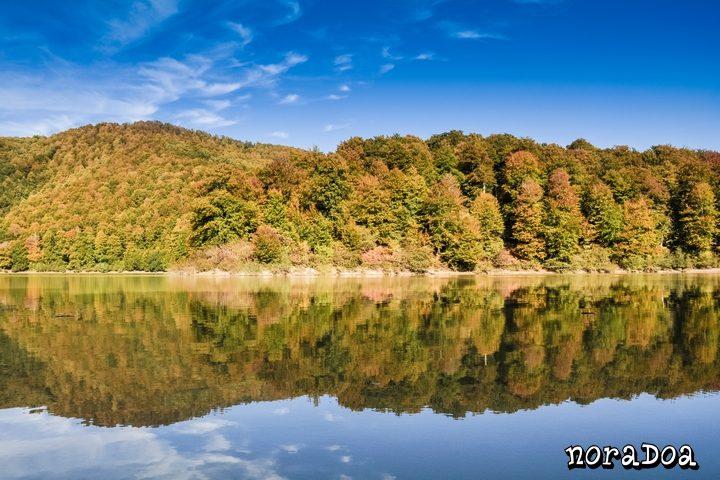 Selva de Irati en otoño, Navarra (España)