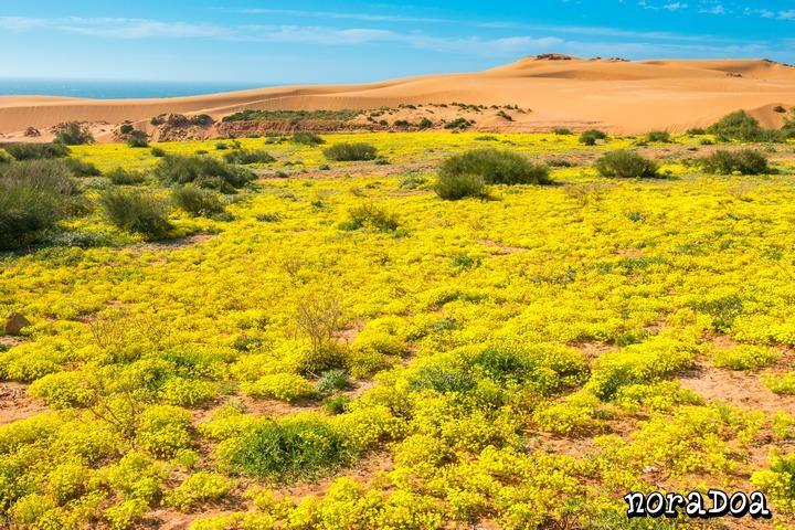 Duna de Tamri (Marruecos)
