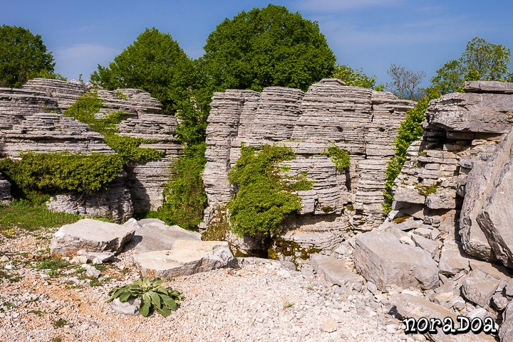 Bosque de Piedra, Epiro (Grecia)
