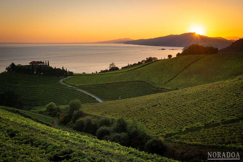 Getaria y los viñedos de txakoli al amanecer