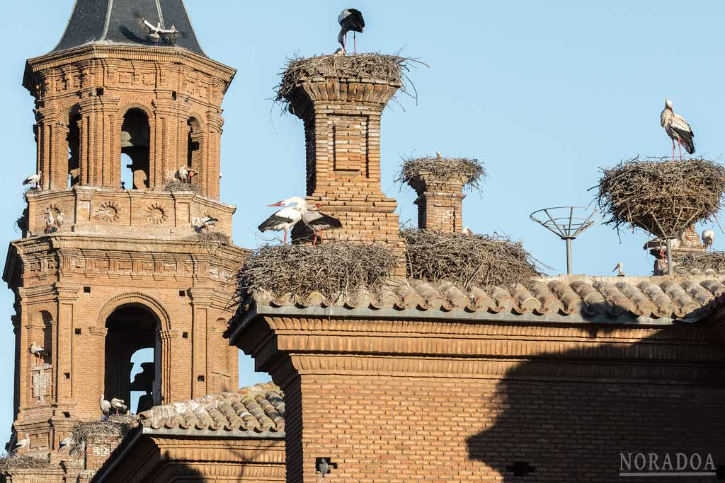 Cigüeñas en la colegiata de San Miguel Arcángel, Alfaro