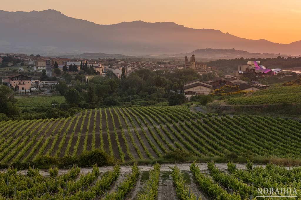 Viñedos y pueblo de Elciego en Rioja Alavesa